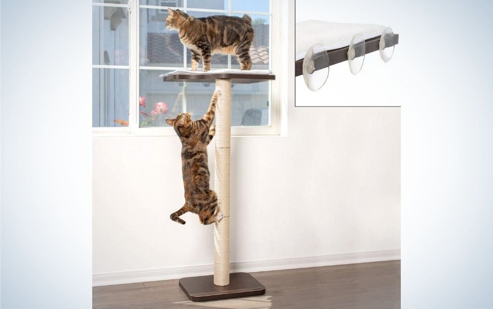 Two brown cat standing over the window perch which has a straight stick and a layer of pork on top of the stick to keep the cat.