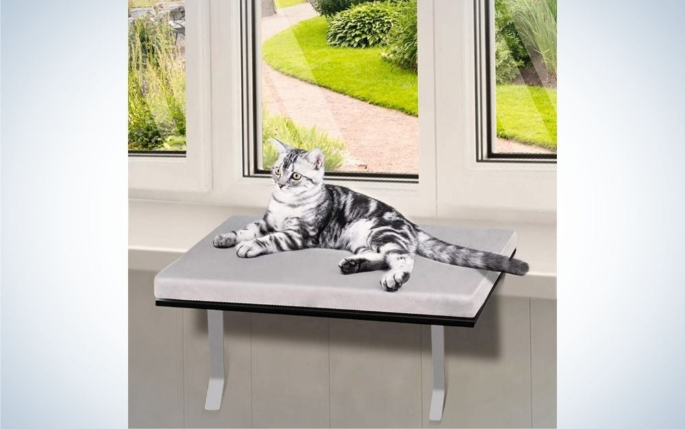 Getting a Window Perch For Your Cat