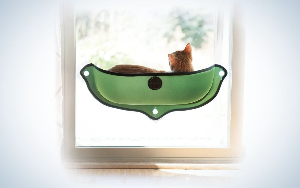A small cat which is standing on a green seat, small and overlooking the window.