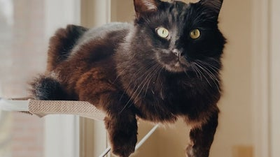 Best cat window perch: The purrfect places to watch kitty TV