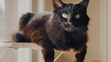 A black cat with golden eyes just laying into her the bed resting on the window.