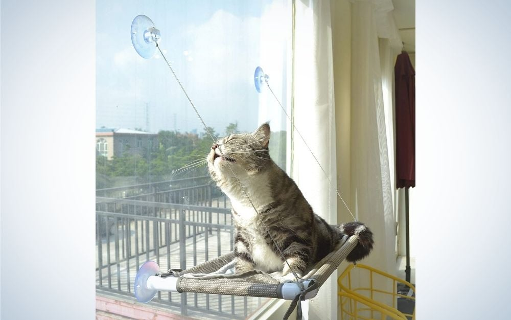 A cat which is relaxing in the sun on its backrest like a bed caught in the window.