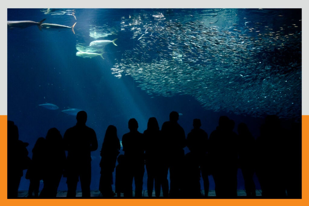 giant tank at monterey bay aquarium