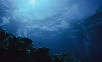 Coral reefs are dying, but it's not too late to save them