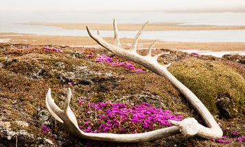 Millions of acres in the Arctic refuge are off limits to drilling—for now