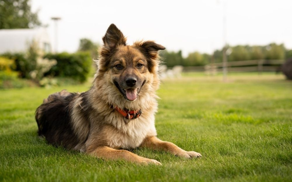 Best dog vitamins: Nutrients and supplements to boost your pet's health