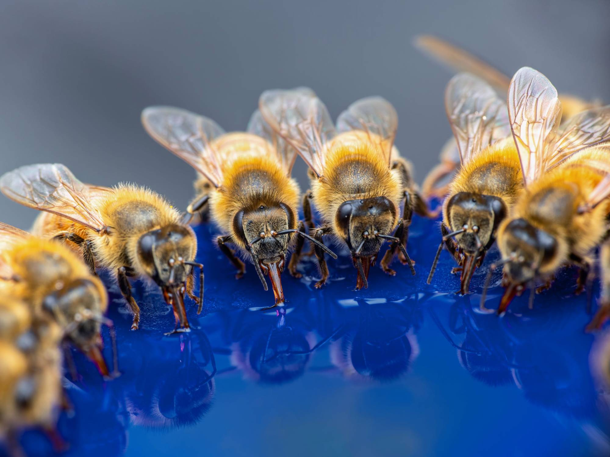 bees-drinking-nectar-from-feeder