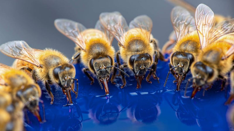 5 ways to keep bees buzzing that don't require a hive
