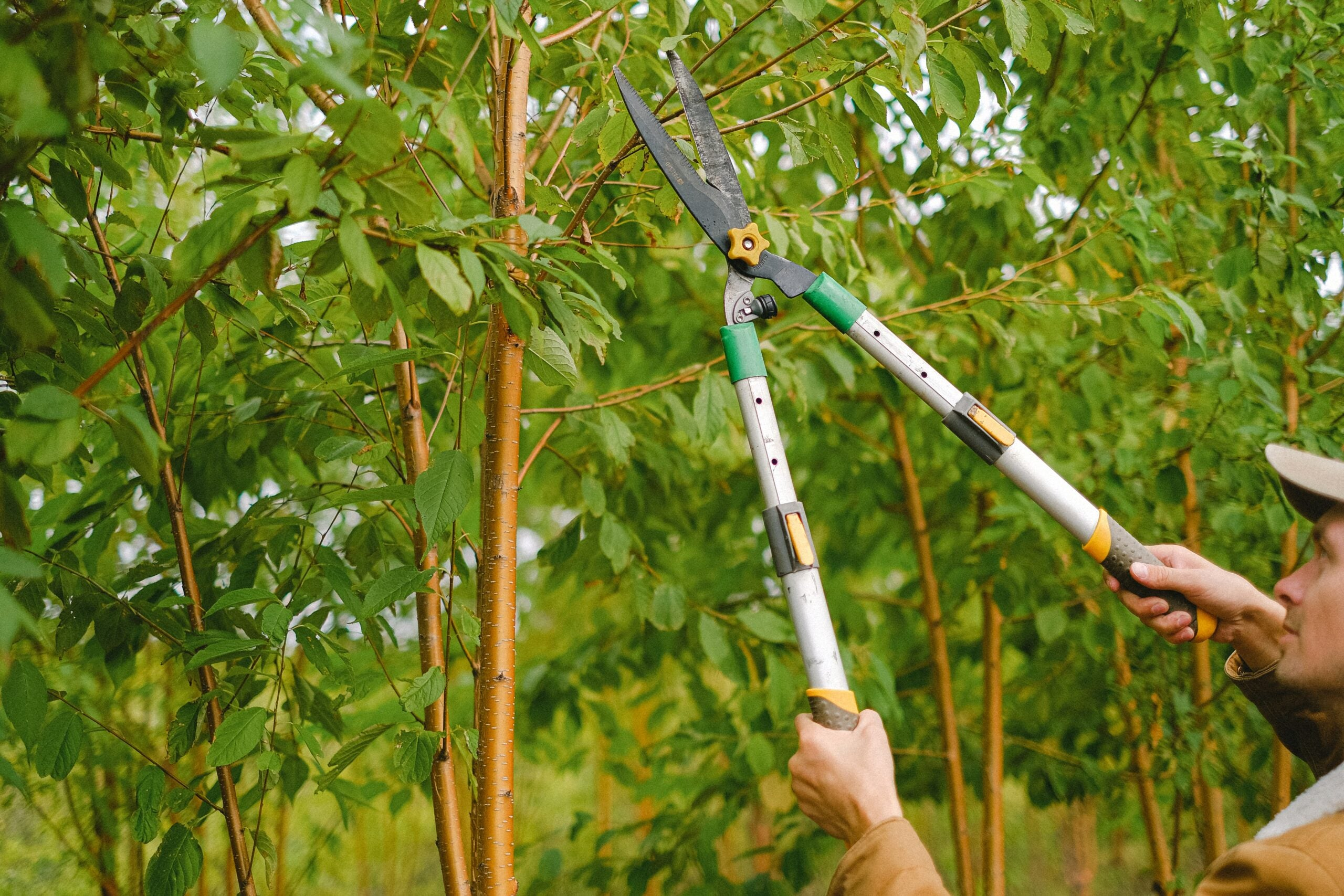 A person wearing a baseball cap and tan jacket holds a pair of green, silver, and yellow pruning shears up to a tree branch, read to cut.