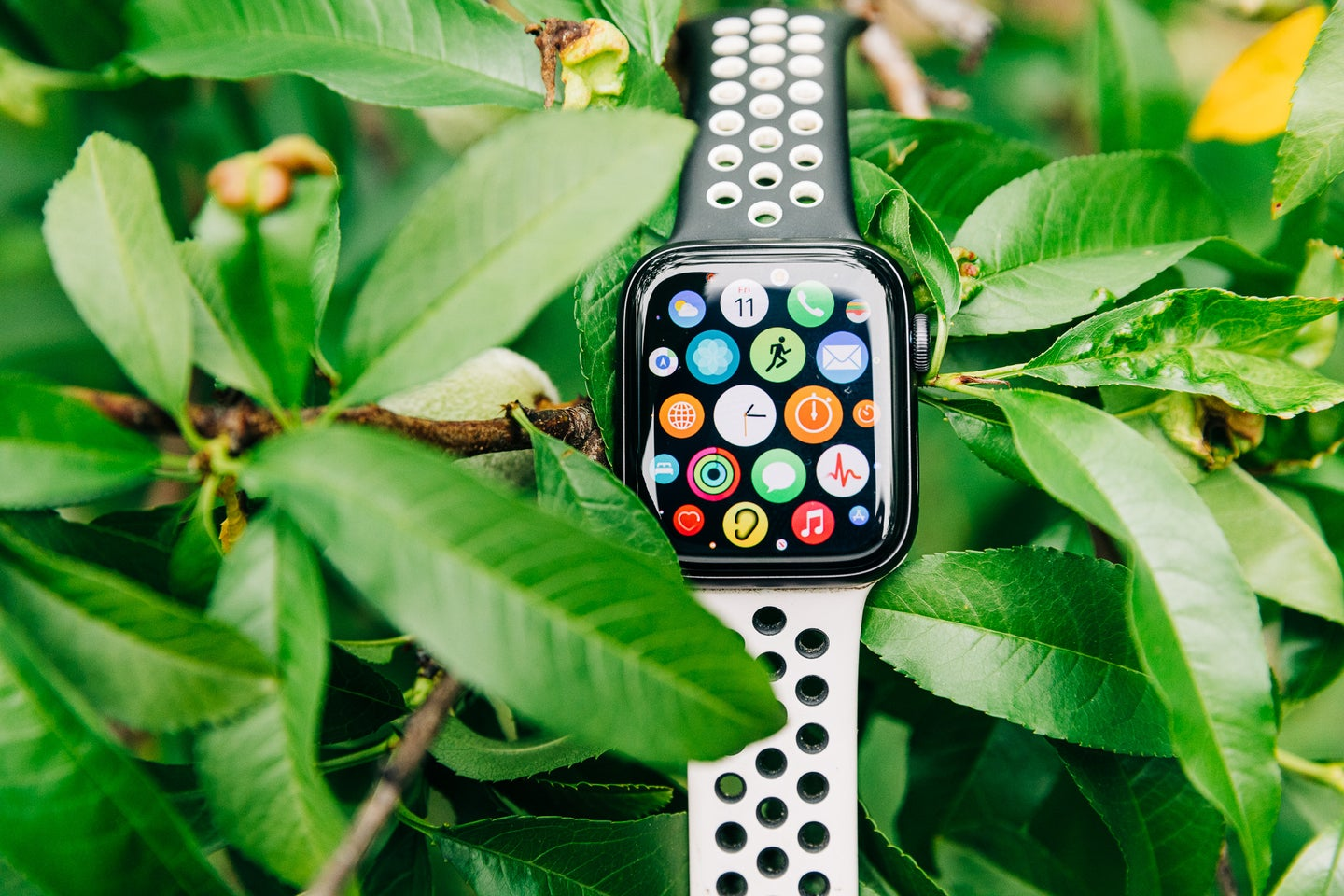 Apple Watch Series 6 in a plant with apps on the screen