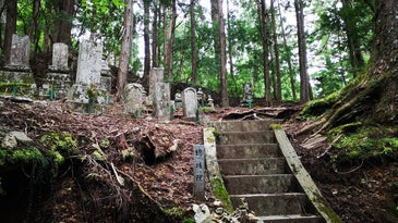 Tree-line tombstones with Japanese characters