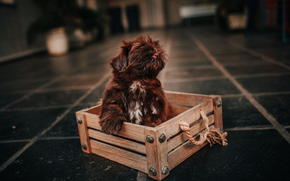 A brown dog which is in the middle of some dark tiles inserted in a wooden box.