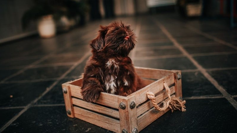Best dog crate: These indestructible pet products for the home keep your pup cozy and safe