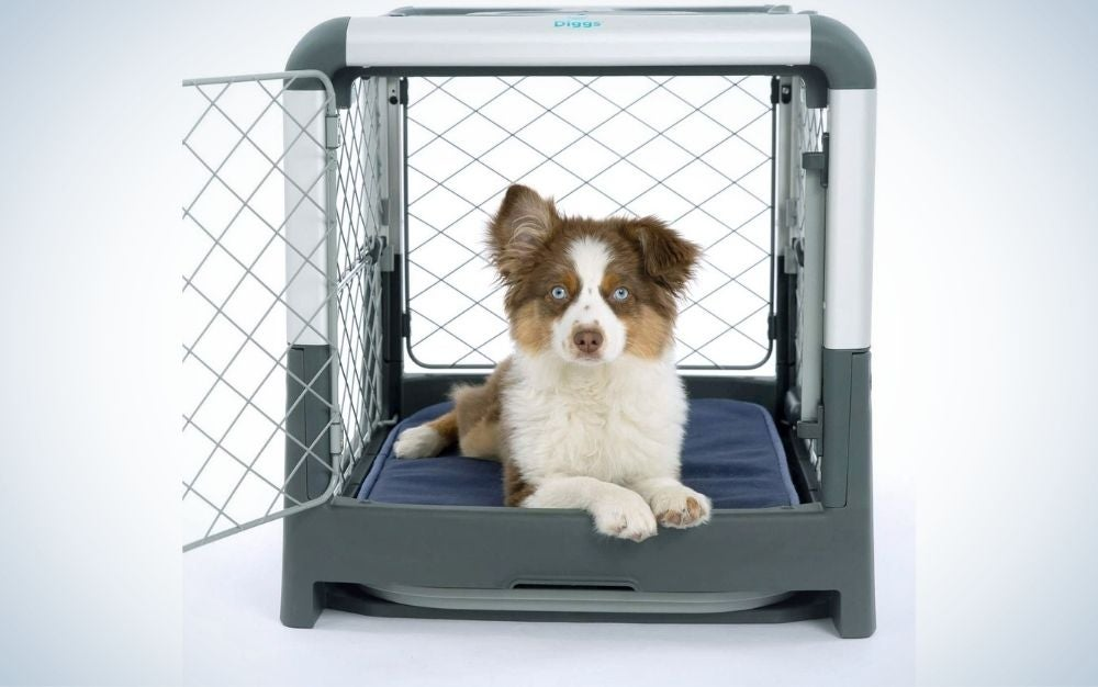 A small white and gray dog that sits and is positioned in a metal dog cage and visible from the outside.