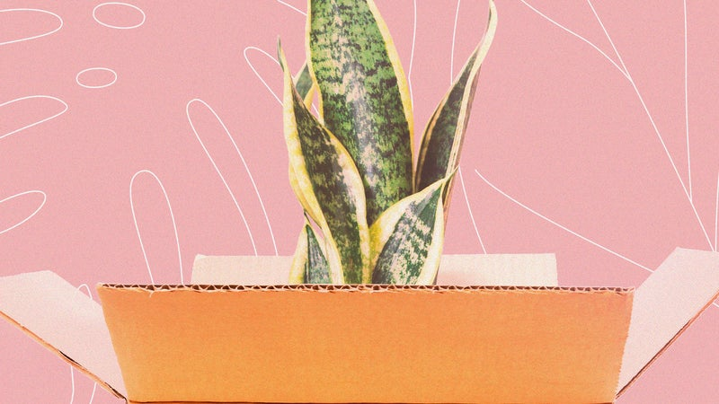 How to ship your beloved houseplants across the country without killing them