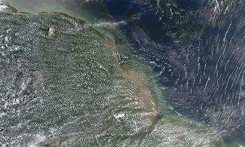 Estuaries could power us to a low-carbon future