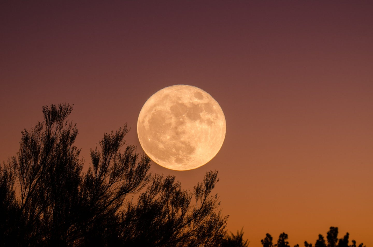 A large, yellow moon rises over the branches of a tree.