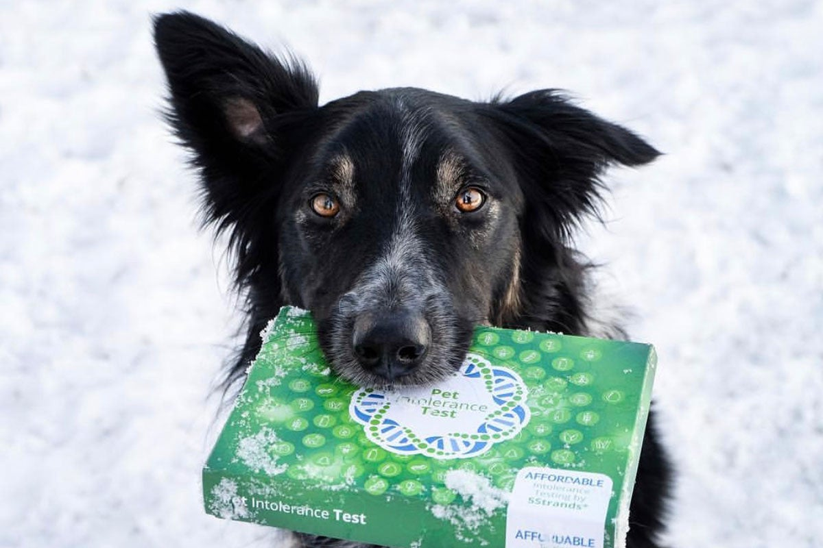 Dog holding pet intolerance kit in it's mouth