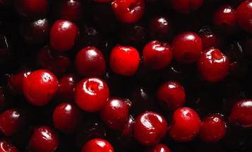 Preserve summer cherries by getting them drunk
