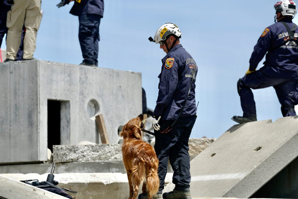 How rescue specialists search for survivors in collapsed buildings
