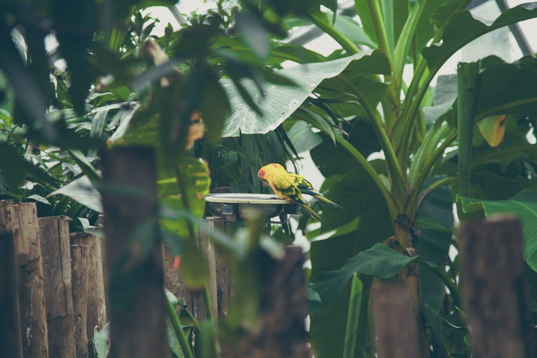 best solar birdbaths
