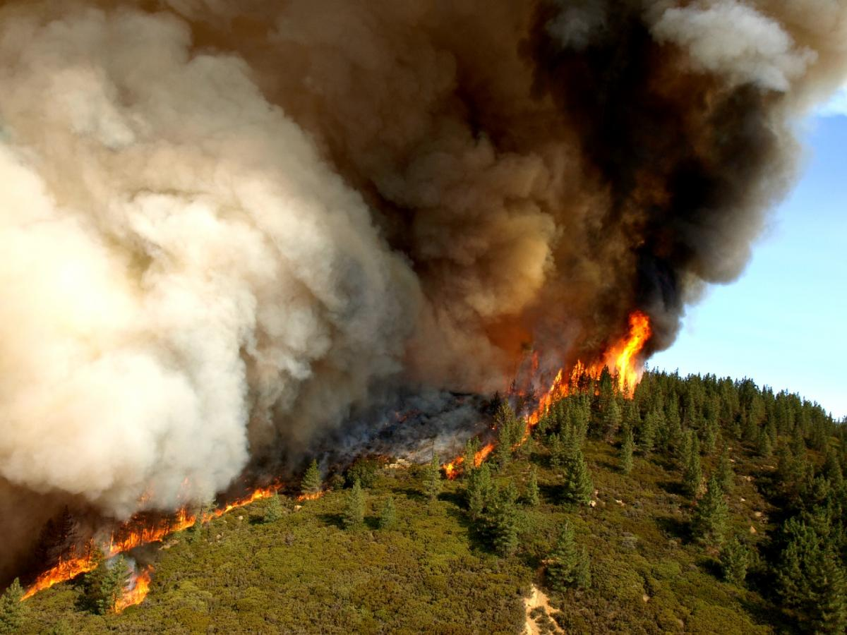 Extreme heat and wildfires have caused literal firestorms across Canada
