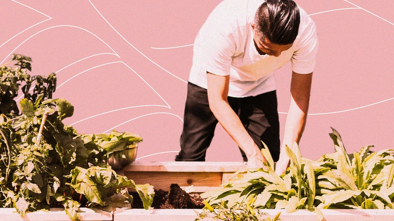 Plant a garden that helps the planet by devouring carbon