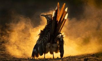 11 astounding bird scenes from the 2021 Audubon Photography Awards