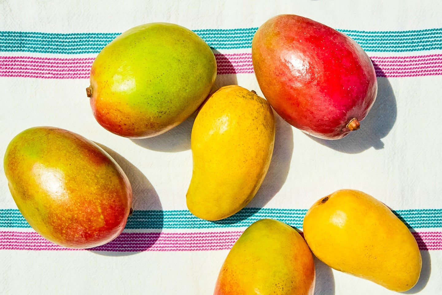 Tommy Atkins and Ataulfo mangoes on a white, blue, and pink blanket
