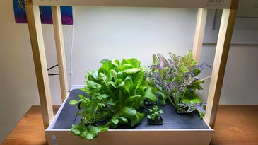 Personal Rise Garden lit up on a countertop