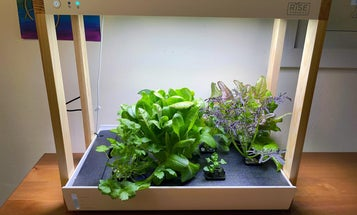 Personal Rise Garden review: A simple solution for bad plant parents