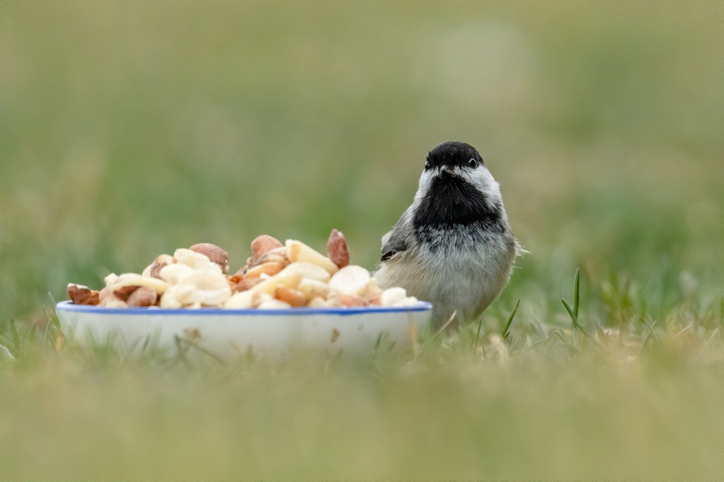 Small bird with bowl of bird food in a field.