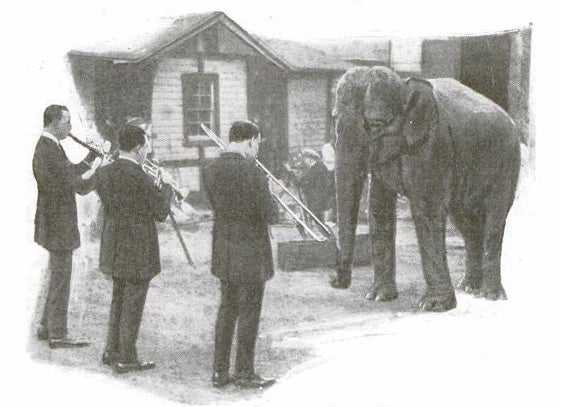 band-playing-for-elephants