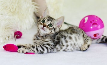 Best cat toys: Your favorite feline will give two paws up to these cat accessories