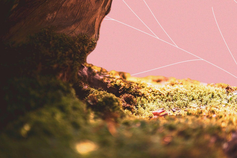 A carpet of moss next to a brown rock.