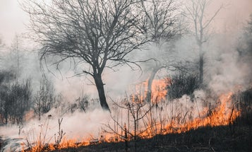 The Dixie fire is on track to be California's biggest ever