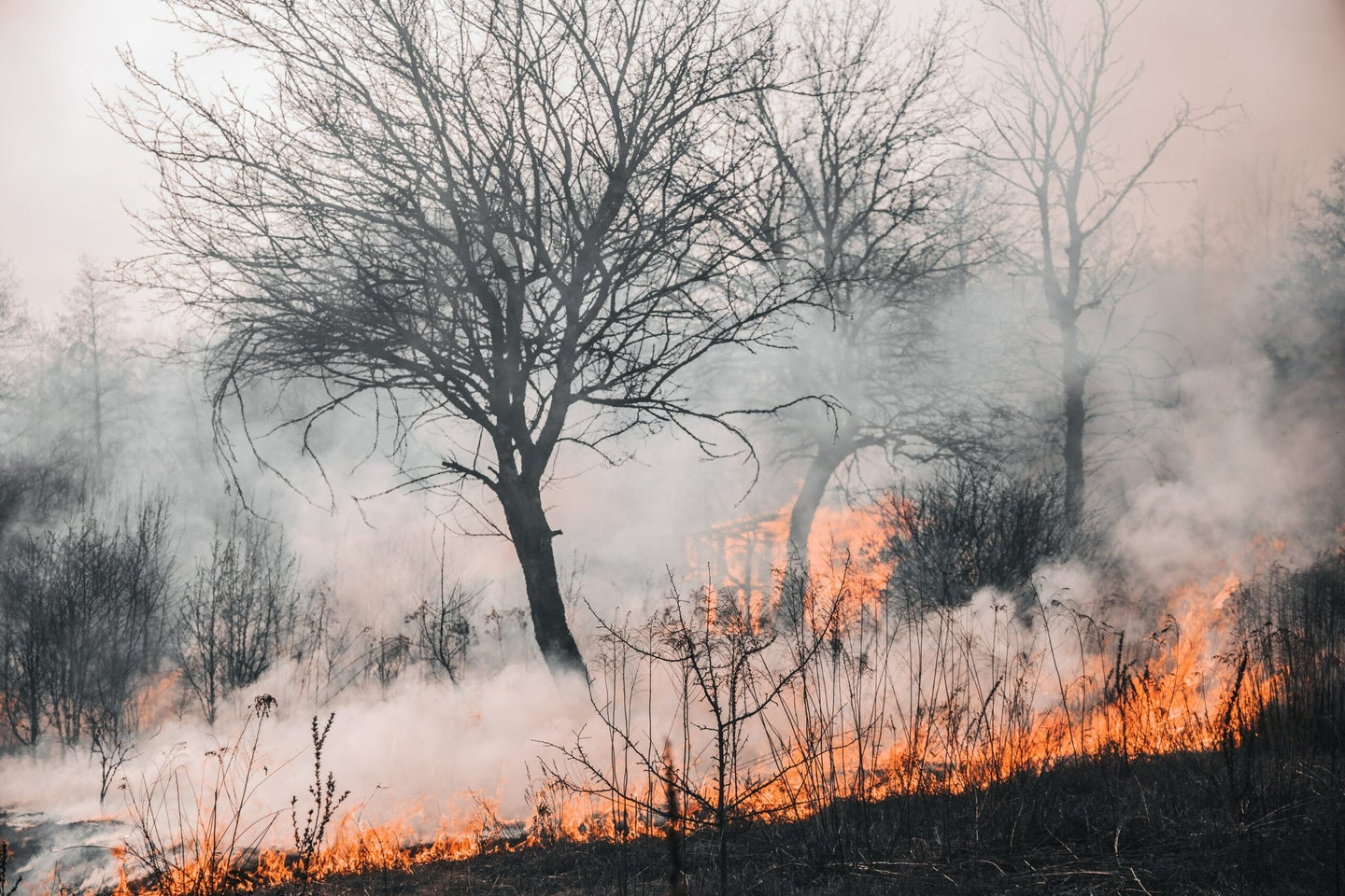 Wildfire in forest with smoke and flames.