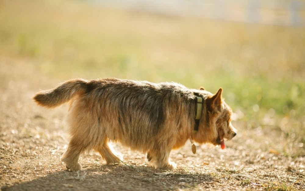 Keep tabs on your furry friends with the best pet GPS tracker.
