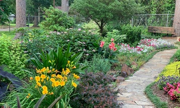 Floods from storms are destructive, but a humble rain garden can help