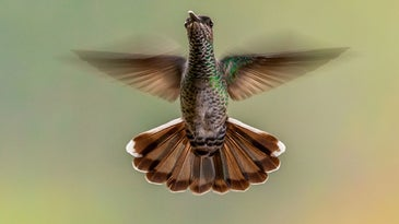 Green hummingbird hovering in the air