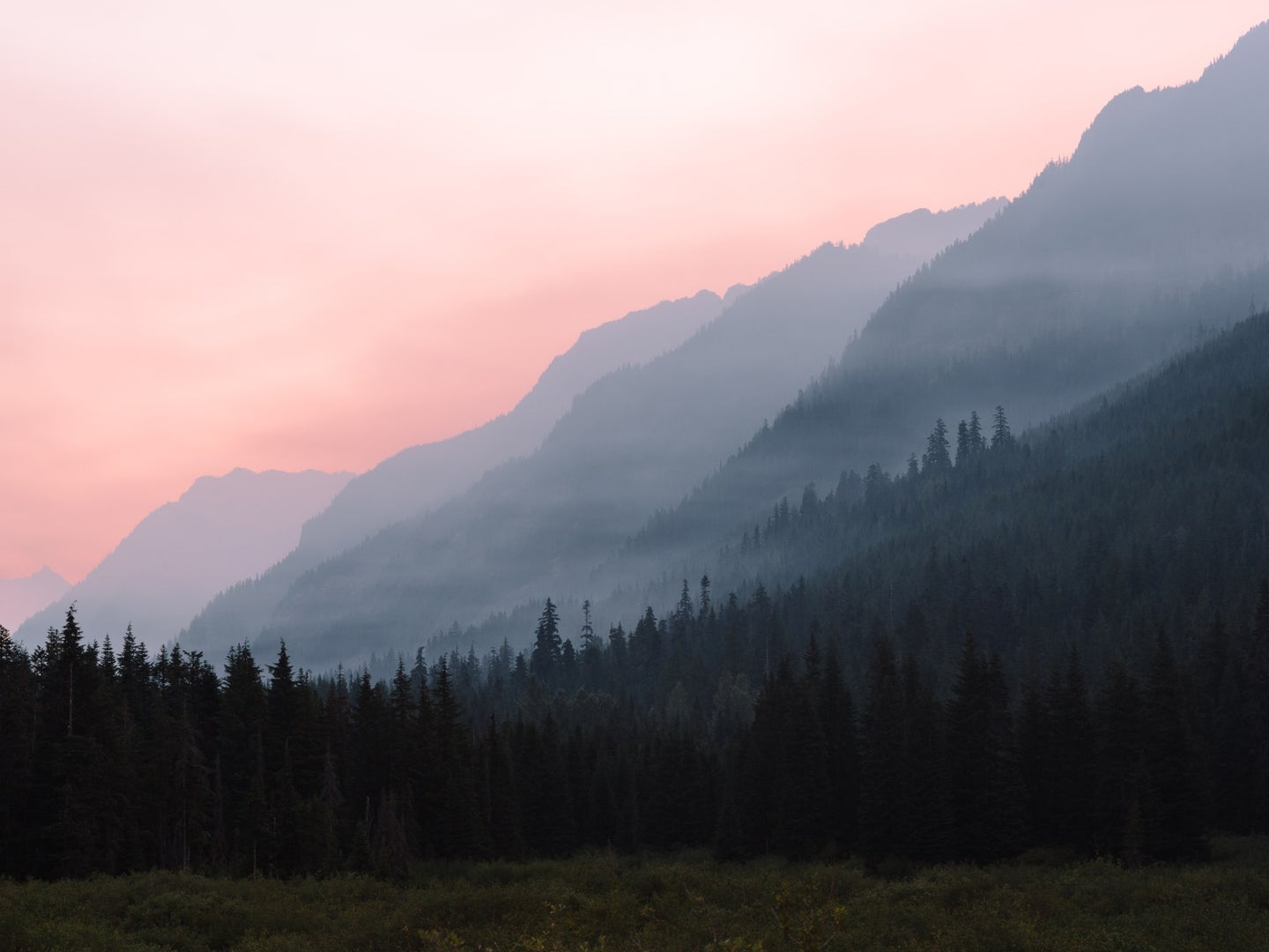 Mountains and a pine forest covered in wildfire smoke.