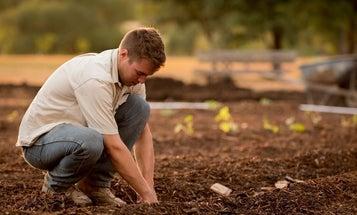 Best garden tiller: Get growing with this essential tool
