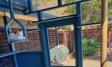 Tips to build the safest, most purr-fect catio for your feline overlord