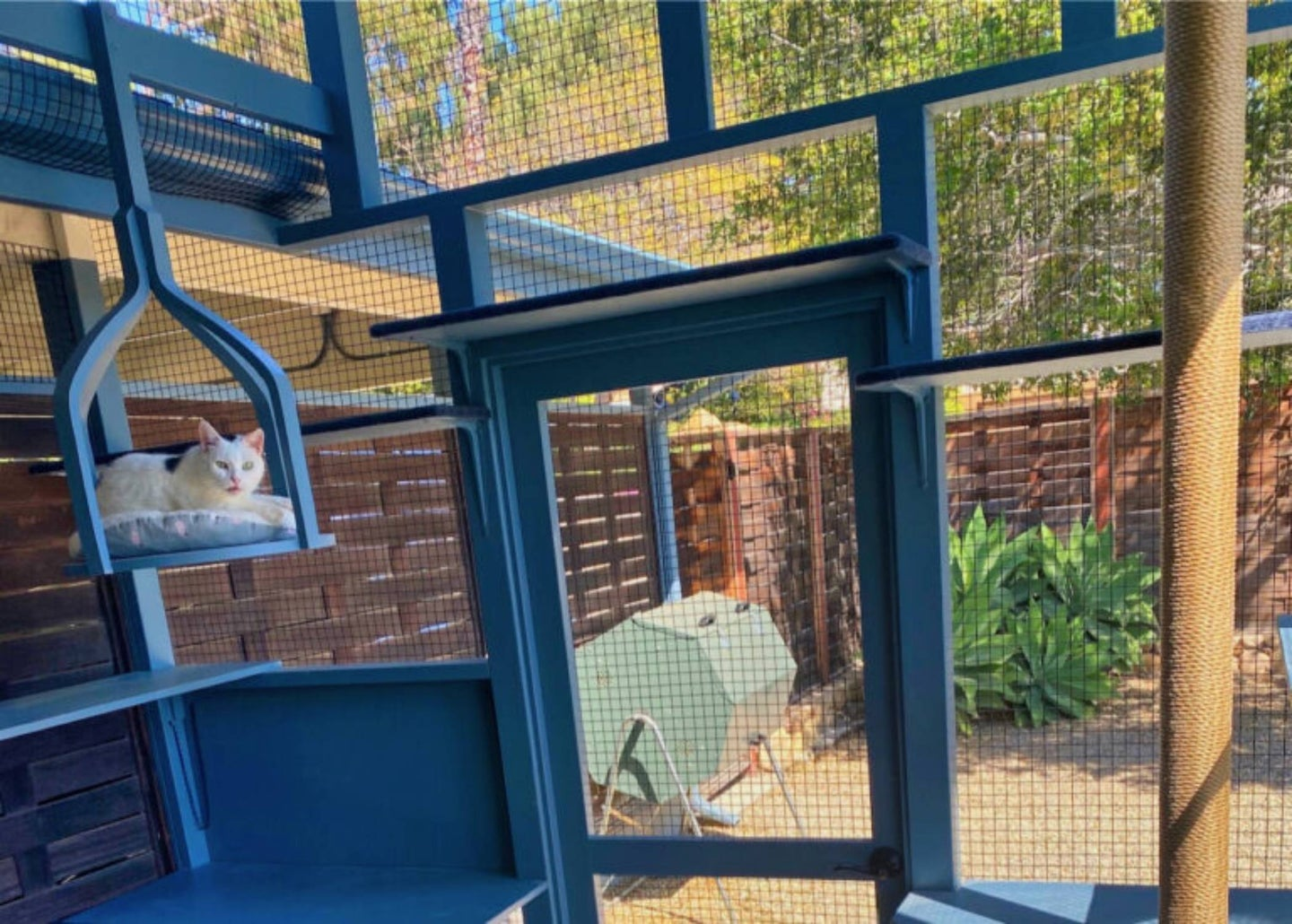 View from inside a catio with white cat on a swing