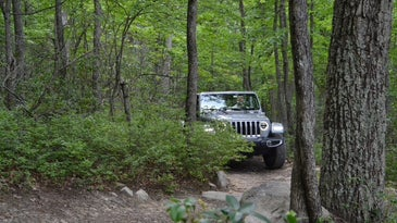 A Jeep Wranger driving through the woods