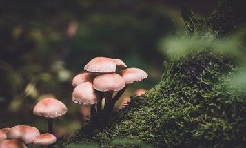 Grow your own mushrooms in a homemade terrarium