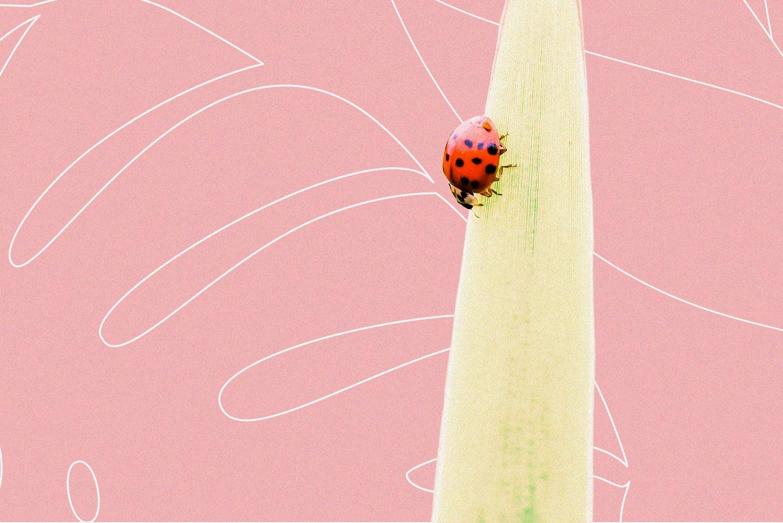 A ladybug on a leaf.