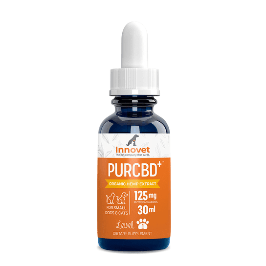 Best CBD oil for dogs: 10 top products and complete guide