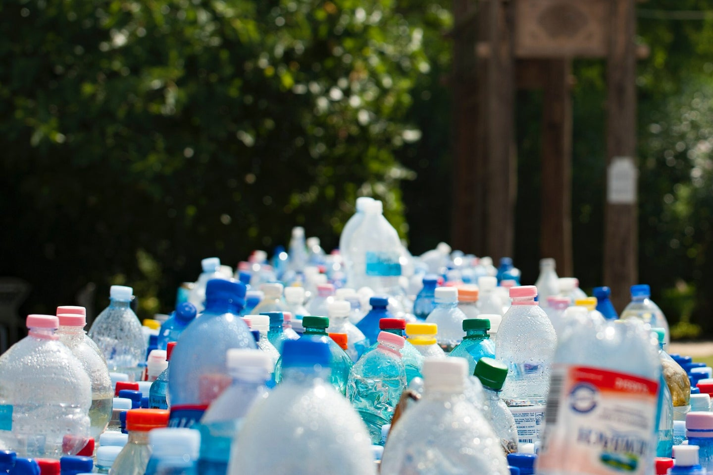 Rows of recyclable plastic bottles