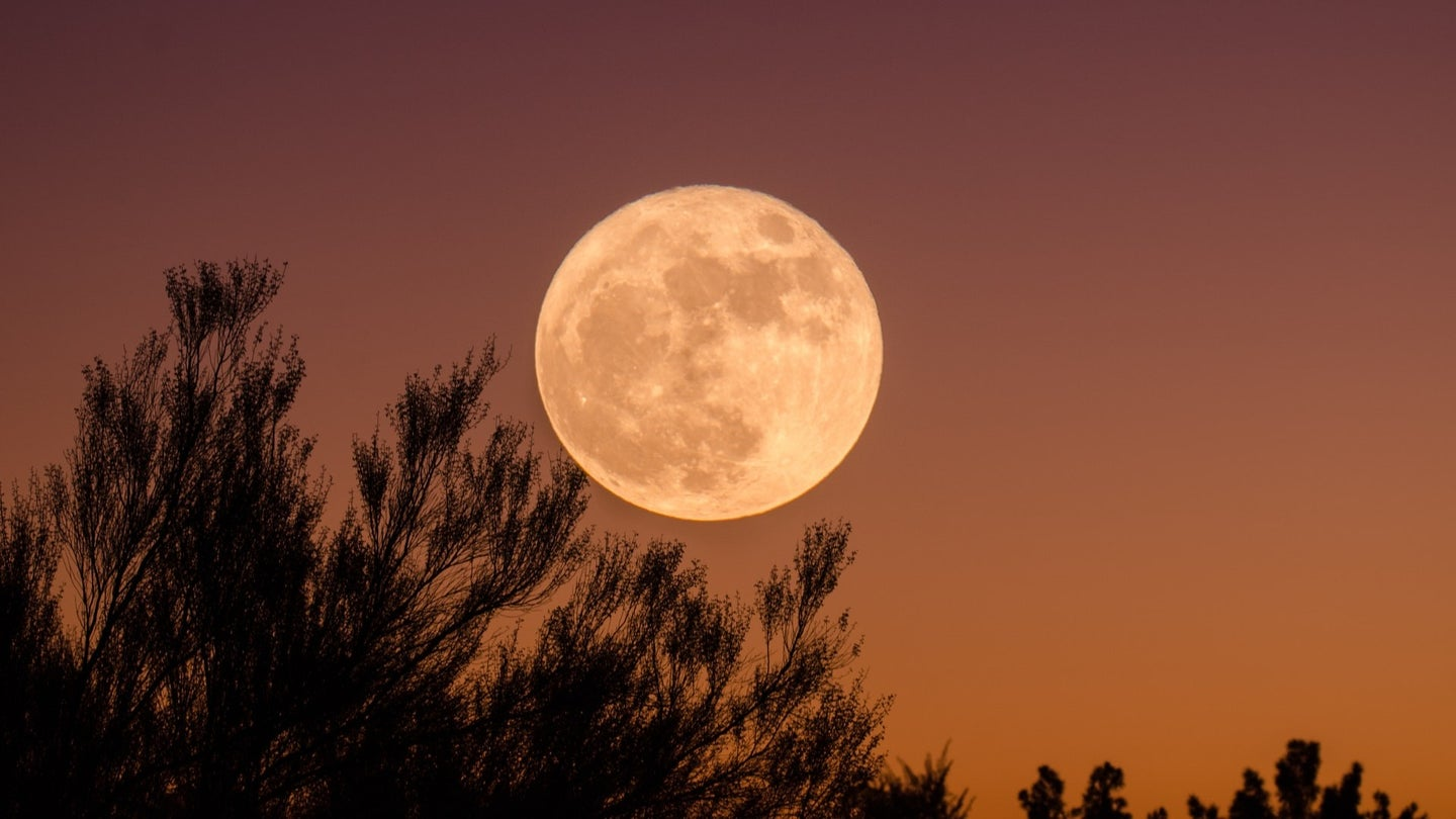 A full moon against an amber sky with foliage brush in the foreground.